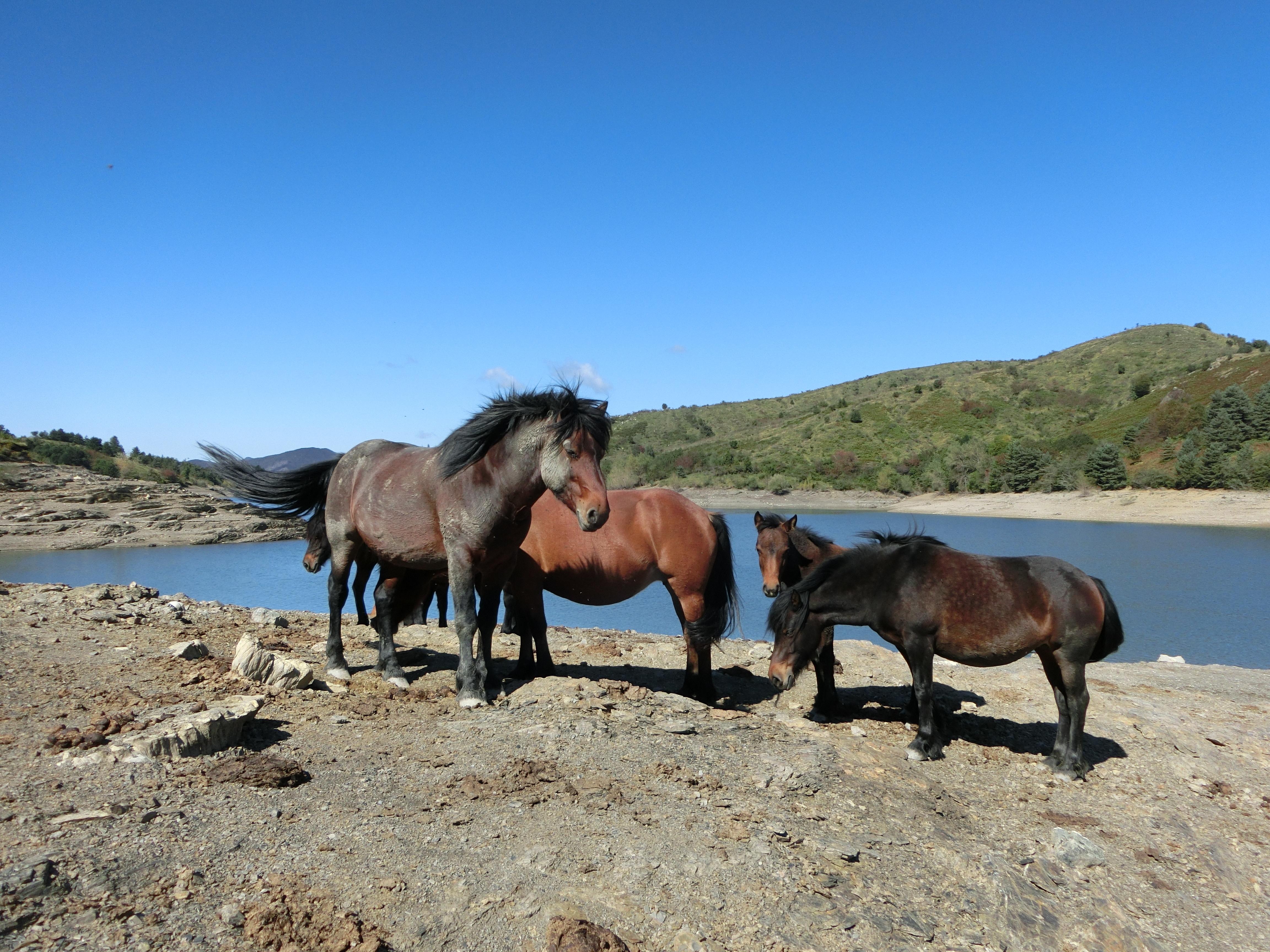 Luomo Che Sussurrava Ai Cavalli Il Viaggiatore Magazine