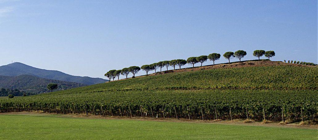 Il Viaggiatore Magazine - Panorama di Maremma Toscana, Grosseto