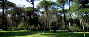 Il Viaggiatore Magazine - Pineta di Cervia - Cervia, Ravenna