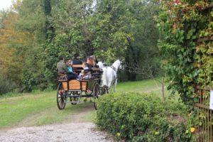 Il Viaggiatore Magazine - Carrozze d'epoca in Friuli Venezia Giulia