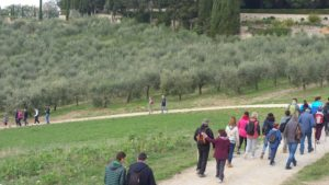 """Il Viaggiatore Magazine - """"Camminata tra gli olivi"""" - Castellina in Chianti, Siena"""