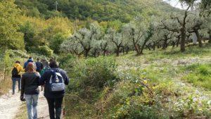 """Il Viaggiatore Magazine - """"Camminata tra gli olivi"""" - Foligno, Perugia"""