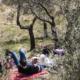 IlViaggiatoreMagazine-Tra gli ulivi di Trevi-Perugia
