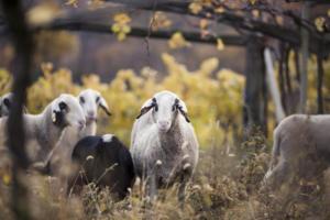IlViaggiatoreMagazine-Azienda Agricola Alois Lag-Bolzano-Foto Florian Andergassen-Vacanze in Alto Adige