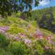 IlViaggiatoreMagazine-Conca dei Rododendri-Oasi di Zegna-Trivero-Biella-Foto Riccardo Trudi Diotallevi