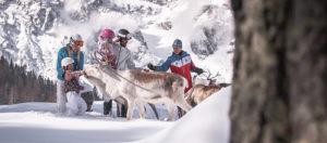 Renne sul Monte Baranci-San Candido-Bolzano