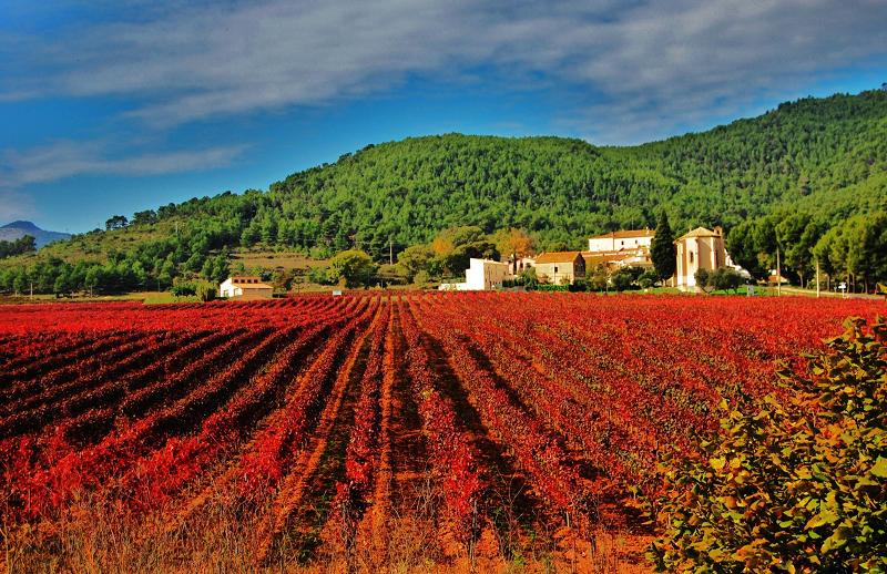 Vigneto rosso d'Aiguaviva-Catalogna Spagna