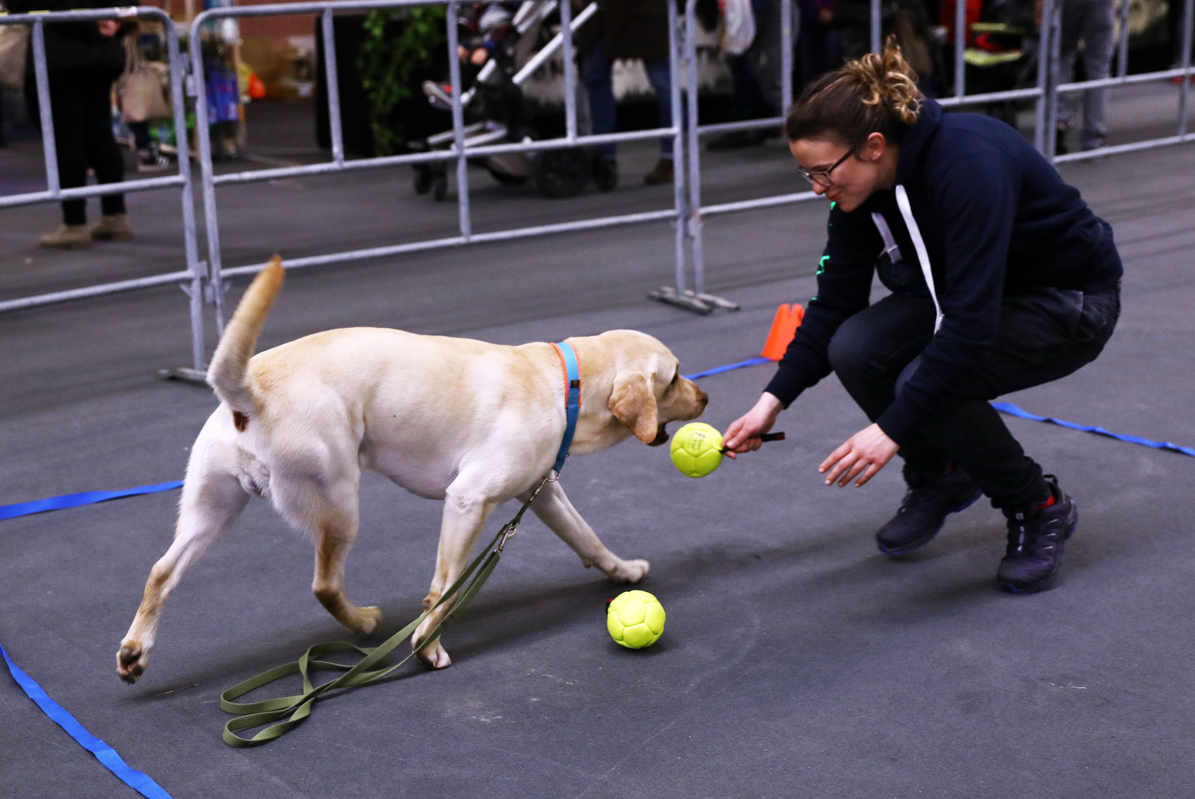 Cani in esercitazione-Fiera di Modena