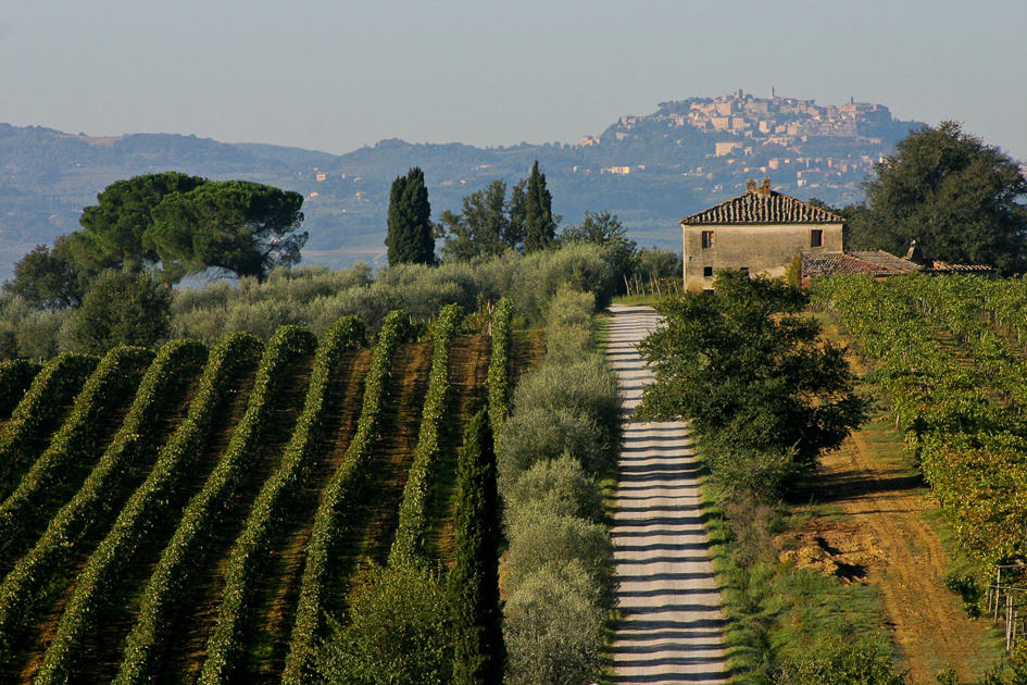 Vigneti-Montepulciano in Toscana