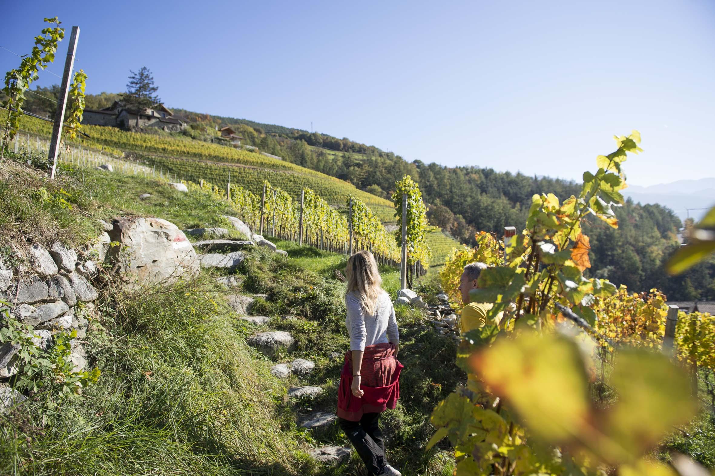 Azienda vinicola-Foto Alex Filz