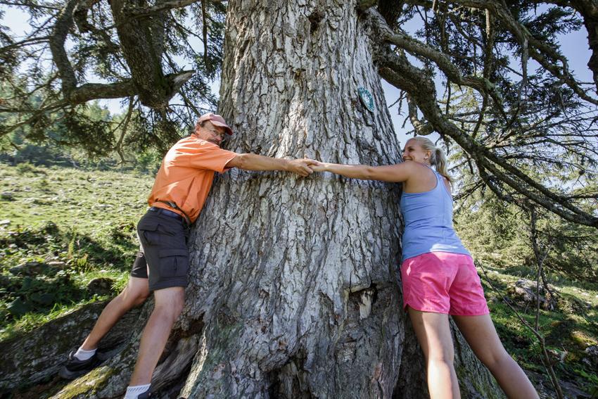 Abbraccio ad un albero antico