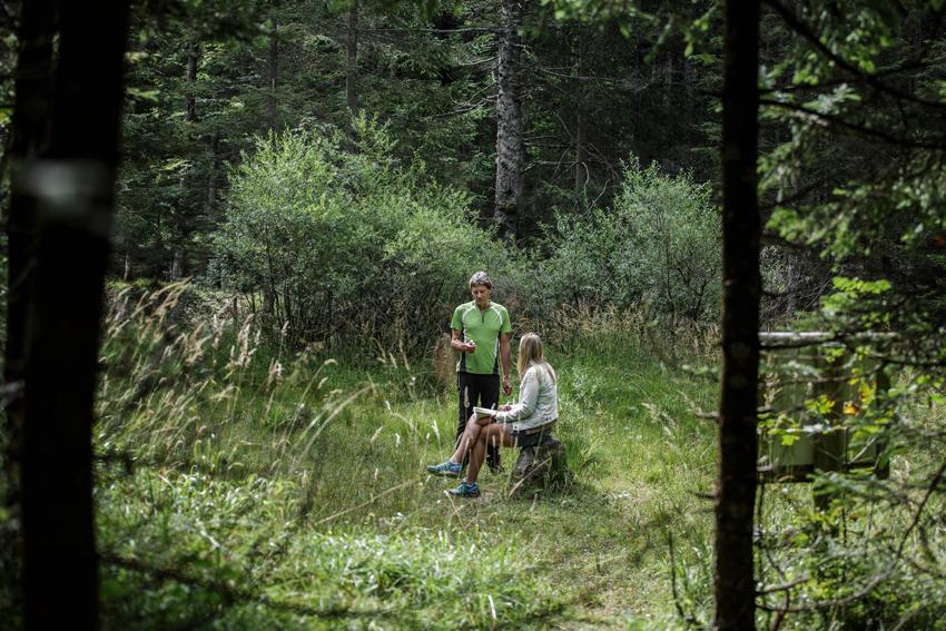Punto energetico nel bosco